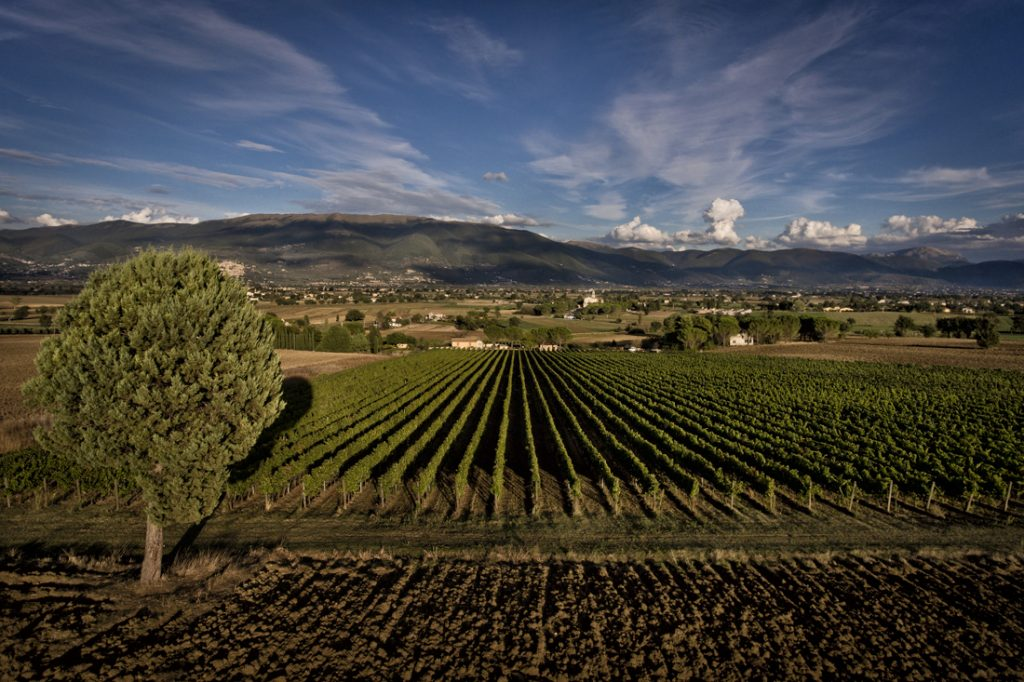 Le vigne di Bocale