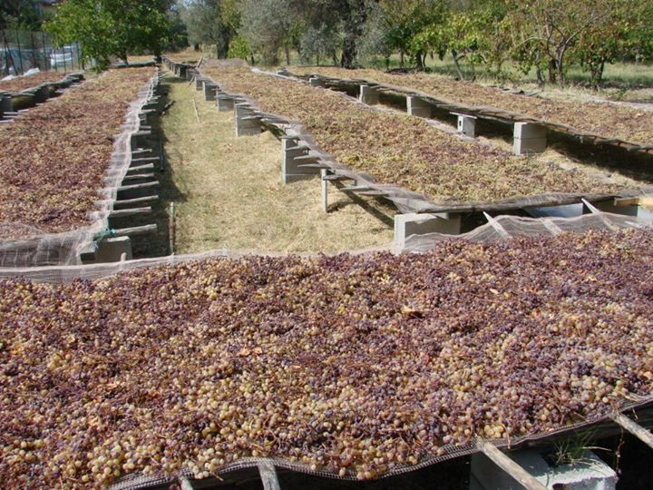 grapes drying to product italian dessert wine